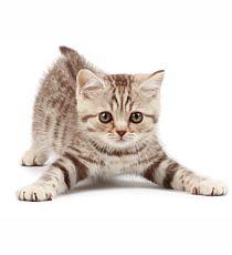 Apetit - PREMIUM KITTY konzerva pro koťata - JUNIOR se zeleninou 410g