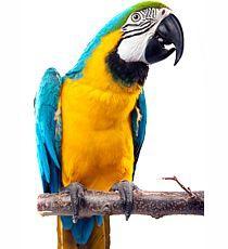 Apetit - PEPPERS MIX pro papoušky s papričkami 800g